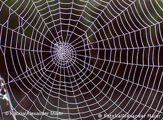A image of a spider web (Photo: Alexander Maier /Fotolia)