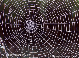 Spinnennetz Fotolia_5005329 Alexander Maier - Fotolia 2007