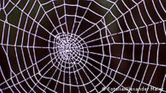 A image of a spider web (Photo: Alexander Maier /Fotolia)