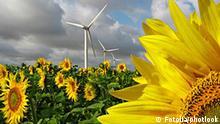 Symbolbild Erneuerbare Energie Windskraft und Sonnenblume