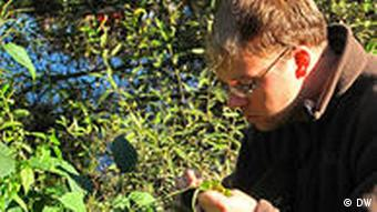 Carsten Nowak inspects a Japanese Knotweed plant