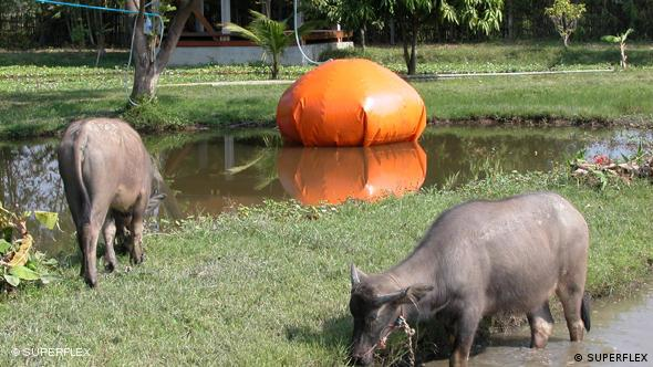 Water buffalo in front of an orange biogas plant