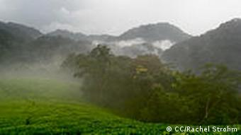 The Nyungwe rainforest