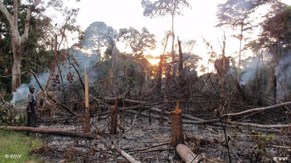 Waldbrand im Kongobecken