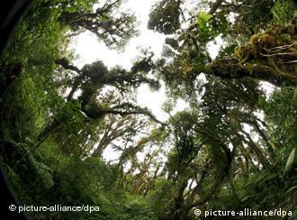 Trees in a reserve in Costa Rica