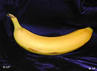 Could the banana's familiar curve soon be a thing of the past?