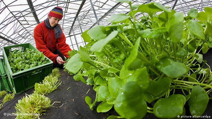 Flash-Galerie Themen der Grünen ökologische Landwirtschaft
