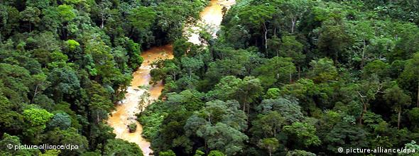 An overhead view of rainforests in the east of DRC