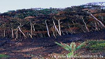 Rain forest clearance in Madagascar (Photo: picture-alliance)