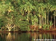 Quizás se llegue a un acuerdo para la protección forestal.