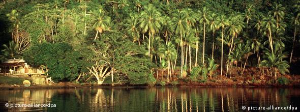Regenwald Neuguinea NO FLASH