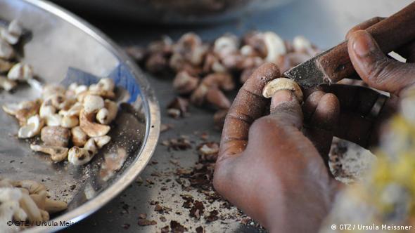 Einkommensfaktor Nachhaltigkeit, Cashew, Benin, Afrika
