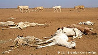 Drought leaves dead and dying animals in northen Kenya, Africa