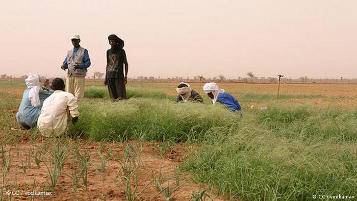 Beberapa pria menanam pohon di Niger.