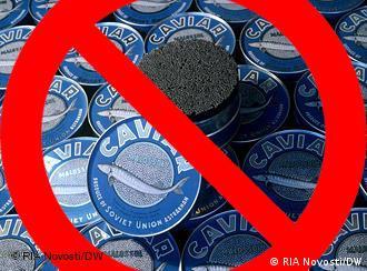 آیا ممنوعیت صید تجاری ماهی خاویاری در سال ۲۰۱۲ اجرا خواهد شد؟