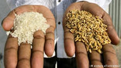 Reis in Bangladesch
