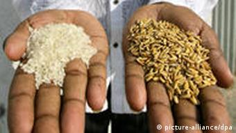 Der Besitzer eines kleinen Reisverarbeitungsbetriebes demonstriert geschälten und ungeschälten Reis, aufgenommen am 18.01.2007 in Joydebpur, Bangladesch. In Bangladesch sind die Lebensmittelpreise in den letzten zwölf Monaten dramatisch angestiegen, ein zwei-Kilo-Sack Reis kostet mittlerweile fast die Hälfte des täglichen Familieneinkommens. Foto: Bodo Marks dpa/lno +++(c) dpa - Report+++