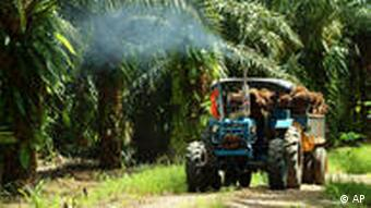 A tractor hulls a load of oil palm bunches at a plantation in Tawau, Malaysia, in Feb. 2006. Three of Malaysia's largest palm oil producers are to merge, Malaysia's Deputy Prime Minister said Thursday, Nov. 23, 2006, a fusion that could potentially create the world's biggest biofuels company and its largest publicly-traded palm oil entity. (AP Photo/Louis Pang)