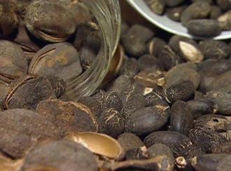 O carvão pode vir a ser uma importante fonte de receitas para Moçambique