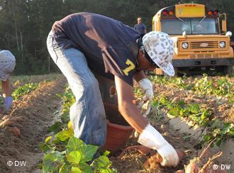Ein Junge erntet Kartoffeln von Hand, im Hintergrund ein in den USA typisch gelber Schulbus (Foto: DW)