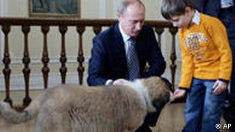 Putin with Buffy (AP Photo/RIA Novosti, Alexei Druzhinin, Pool)