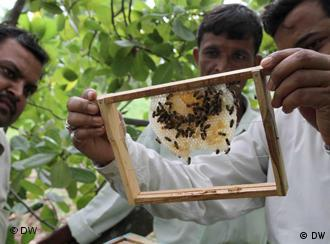 Atar Singh inspects a farmer's bee box