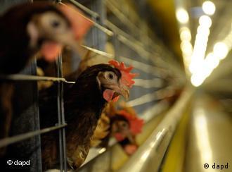 A chicken farm
