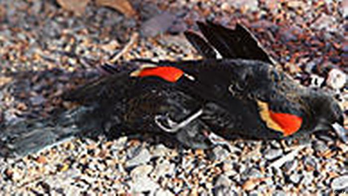 A dead bird in the US state of Arkansas