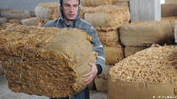 Mazedonien Land und Leute Tabak aus Mazedonien Prilep