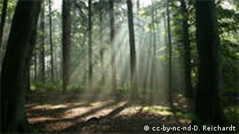 Wald mit Sonnenstrahlen Quelle: http://www.flickr.com/photos/d-reichardt/1292470165/sizes/l/in/photostream