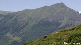 Berg Schar Planina in Mazedonien