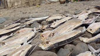 Flugfische als Einkommensquelle in Sao Tome
