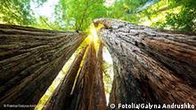 Flash-Galerie Das internationale Jahr des Waldes