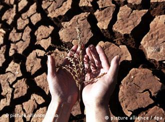 A pair of human hands hold a crop over dry, cracked earth