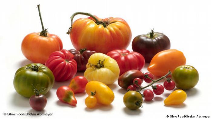 Achtung: Nur für Berichterstattung über Slow Food - Tomaten (Slow Food/Stefan Abtmeyer)