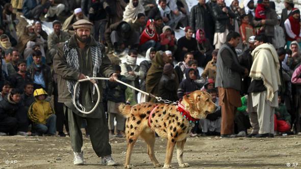 سگ جنگ