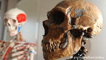 Neanderthaler Schädel