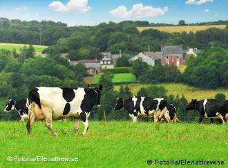 ل يصبح حليب البقر بديلا عن حليب الأم؟