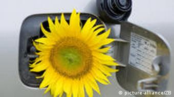 A sunflower sticking out of a gas tank