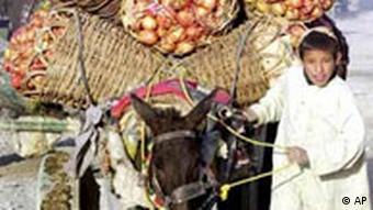 Ein afghanischer Junge, ein Esel mit Granatäpfeln beladen, auf dem Weg zum Markt nach Kandahar