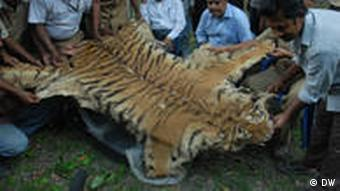 india s tiger census reveals encouraging rise environment all