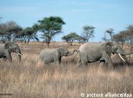 Famílias de elefantes já mudaram rotas antigas de migração