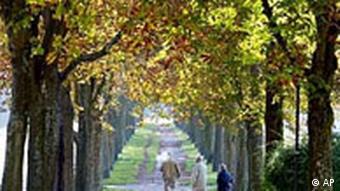 Herbstwetter mit Kastanienallee