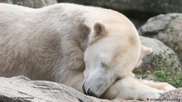 Knut lying down (picture-alliance/dpa)