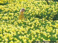 بہار کا موسم آتے ہی کئی لوگوں کو سانس سے متعلق الرجی لاحق ہو جاتی ہے