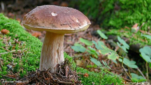 In der Ferienregion Schwarzwald ist Pilze sammeln ein beliebtes Hobby. Quelle: http://www.schwarzwald-tourismus.info/media/presse/fotos_fuer_redaktionen/essen_und_trinken