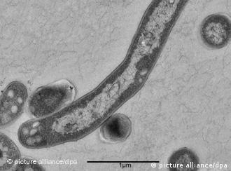 Em 1993 a OMS declarou a tuberculose como emergência mundial