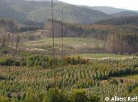 La mayoría de las plantaciones comerciales en Chile no son especies nativas. En la foto, una plantación de eucalyptus globulus.
