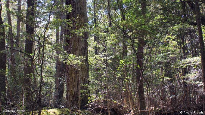Flash-Galerie Forschung der Wälder in Chile