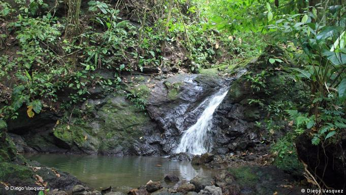 Forest stream in Chocó, Colombia